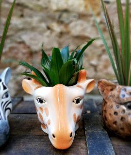 Test ceràmic amb forma de cap de girafa.