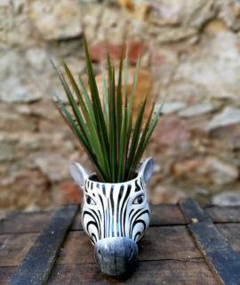 Test ceràmic amb forma de cap de zebra.